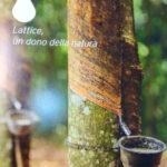Raccolta del lattice, un materiale naturale